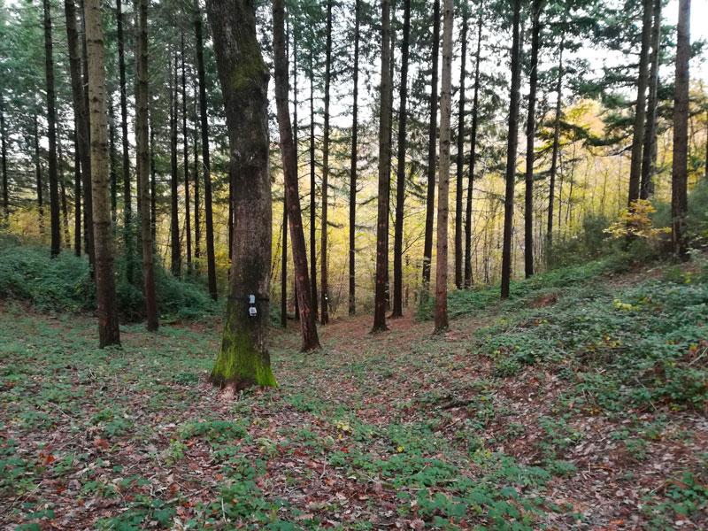 'La voce degli alberi'  RaiRadio3 – TreSoldi – 8-12 aprile 2019